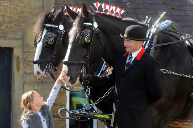 The Thwaites Shire Horses will be at the Ranken Arms on Saturday