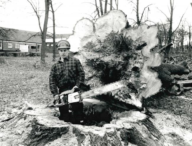 Andrew Dewhurst  was called in to fell a giant tree at Wilson Playing Field, Clayton-le-Moors, in 1990