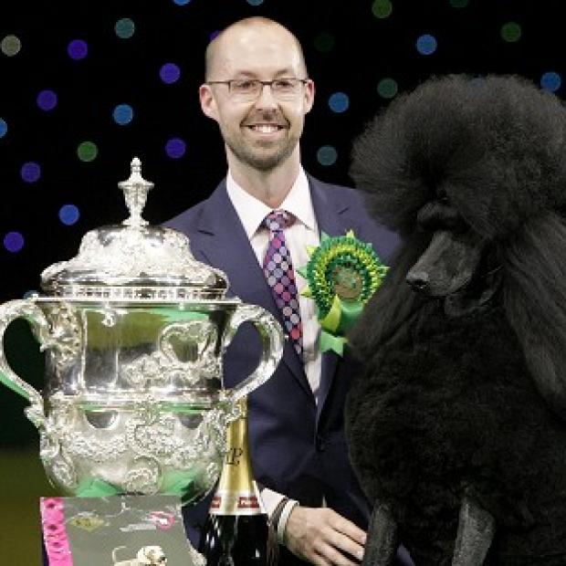 Lancaster And Morecambe Citizen: Two-year-old standard poodle Ricky with his handler Jason Lynn, after winning the world's most prestigious dog show prize
