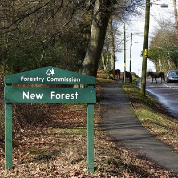 Lancaster And Morecambe Citizen: The Wiggle New Forest Spring Sportive cycle took a route through the national park