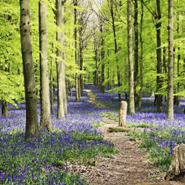 Lancaster And Morecambe Citizen: The Woodland Trust said warmer weather has led to bluebells flowering earlier than last year