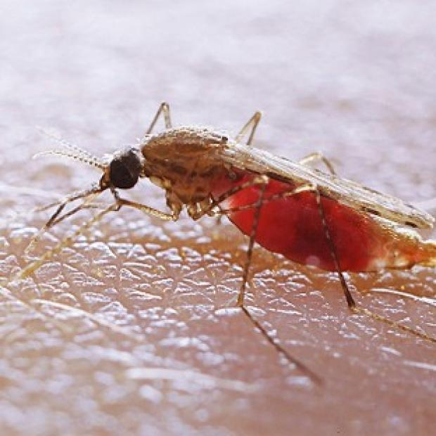Lancaster And Morecambe Citizen: Fans have been warned about bugs that can spread diseases like malaria