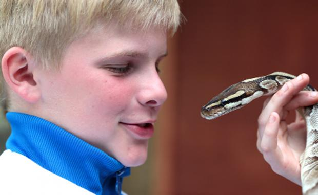 Lancaster And Morecambe Citizen: Tyler Baines's encounter with a snake at the Wildlife Oasis