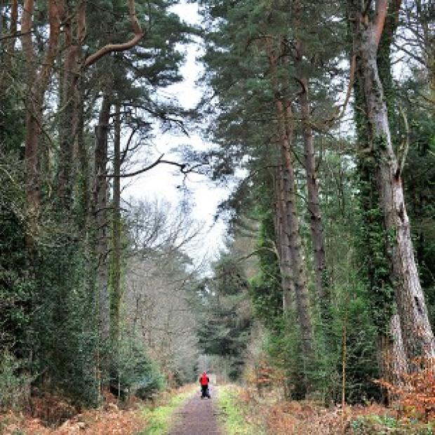 Lancaster And Morecambe Citizen: Only 10% of England is woodland