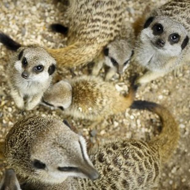 Lancaster And Morecambe Citizen: Several meerkats were part of the cargo of a stolen van