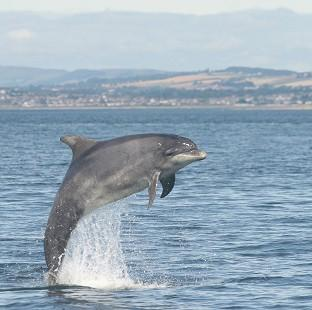Lancaster And Morecambe Citizen: A bottlenose dolphin jumping in the North Sea.