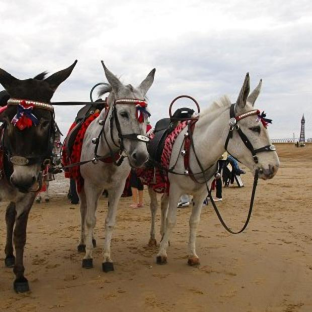 Lancaster And Morecambe Citizen: Donkey rides on the beach have fallen foul of health and safety rules