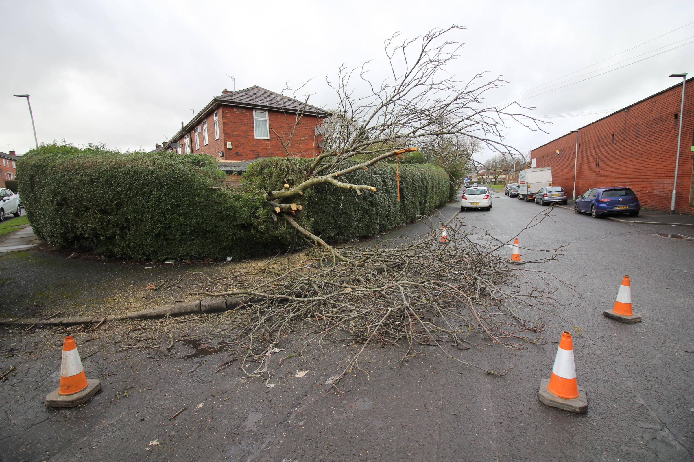 The fallen tree in Poole Street, Blackburn